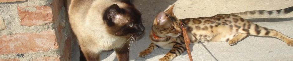 Šáňa se svou životní láskou Estýškem, naším thajským kastrátem  :) :)